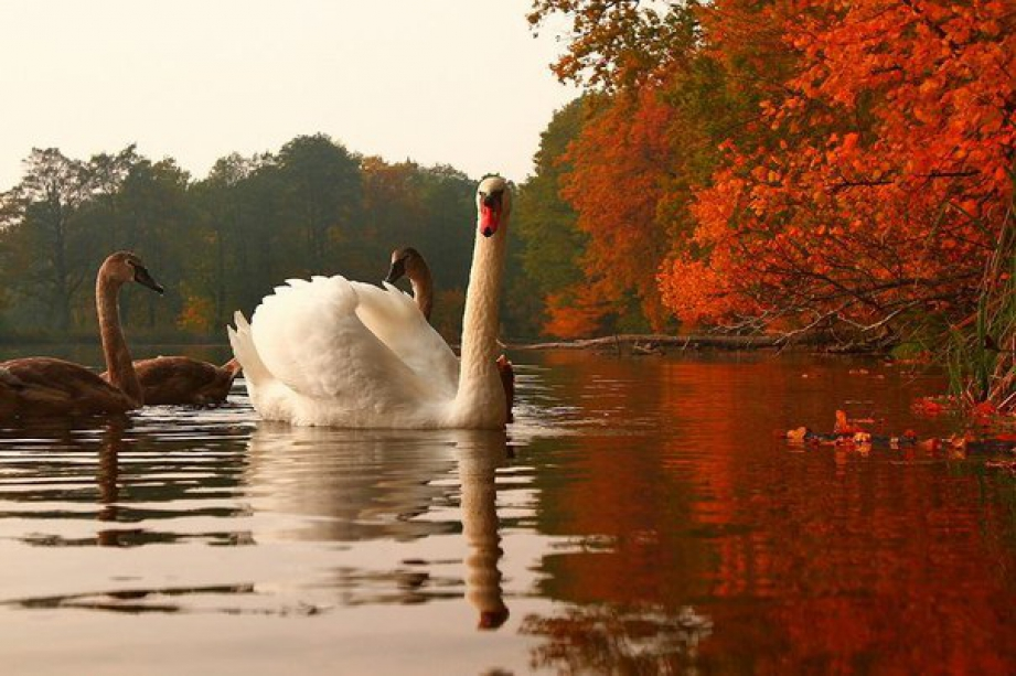 Swan Pond - photo of russia